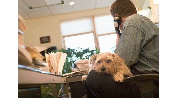 Should You Bring Your Dog to Work or Not