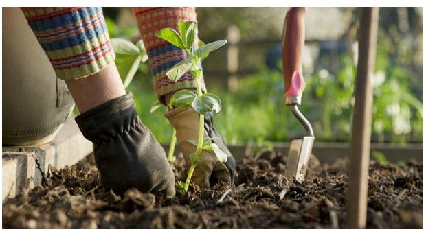 Get Your Hands Dirty with WWOOF